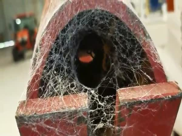 Spider Bro Is Offered A Sacrifice By Shop Workers