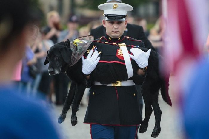 People Pay Tribute To Dog Who Was A Hero Of War (6 pics)