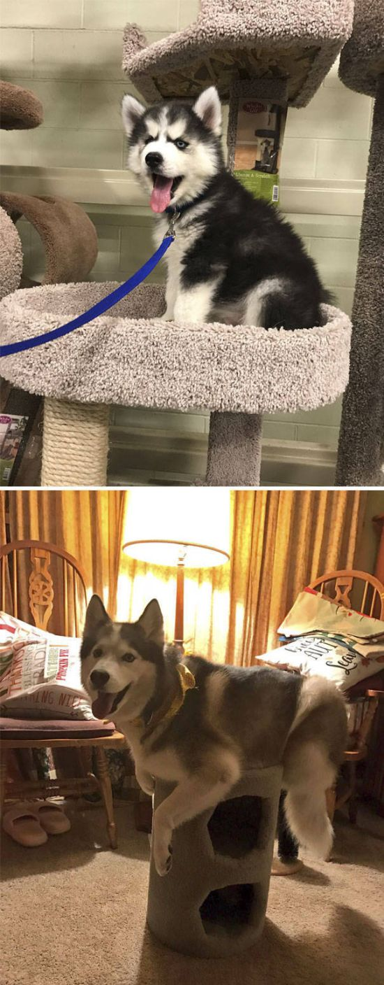 Dogs Who Definitely Think They're Cats (30 pics)