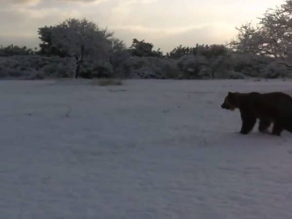 Rescued Circus Bear Plays in The Snow For The First Time
