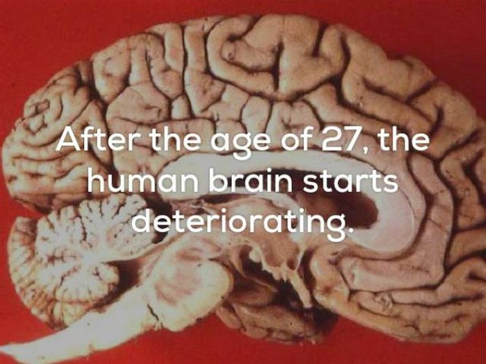 Little Facts That Will Creep You Out Big Time (20 pics)