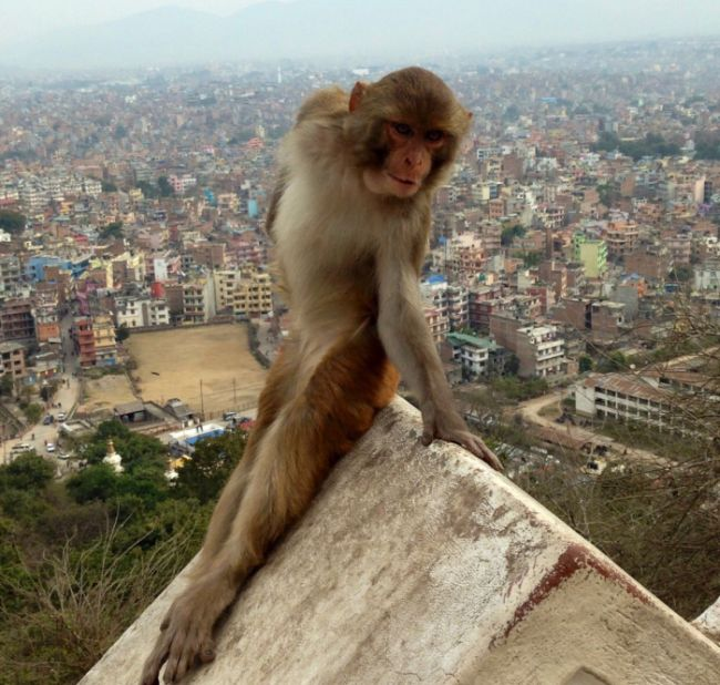 Monkey Looks Like A Girl Who's Excited To Study Abroad (3 pics)