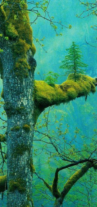Amazing Trees That Refuse To Die (31 pics)