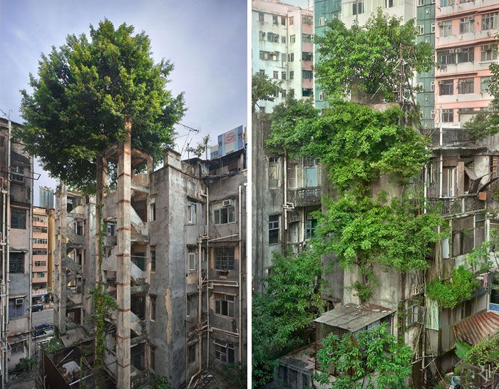 Amazing Trees That Refuse To Die (31 pics)