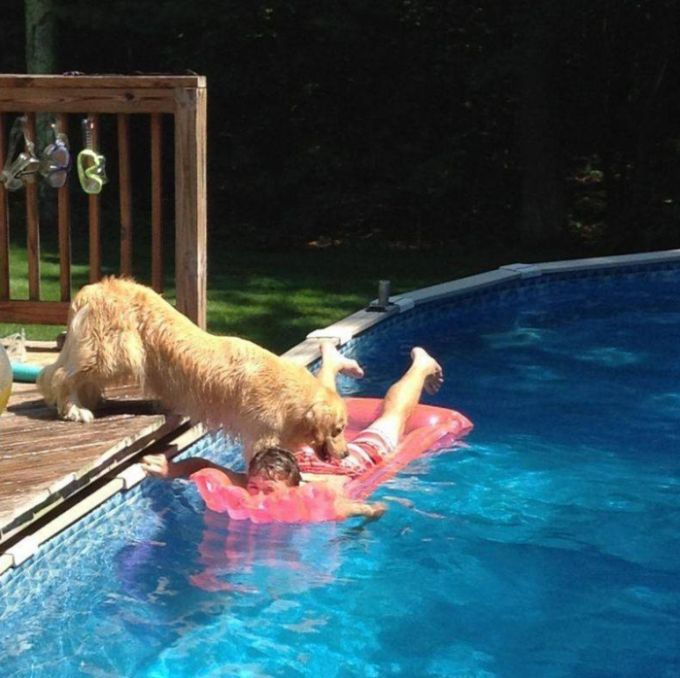 Dog Knows Exactly What It Wants (3 pics)