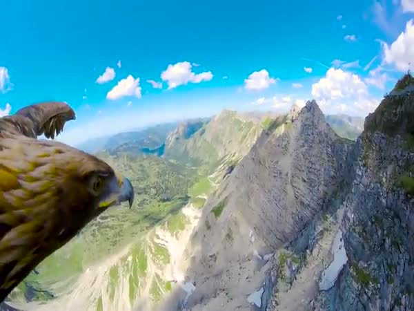 Stunning Eagle's Point of Ciew of The Alps