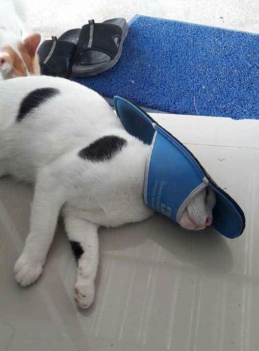 Cat Plays With Slipper And Loses (4 pics)