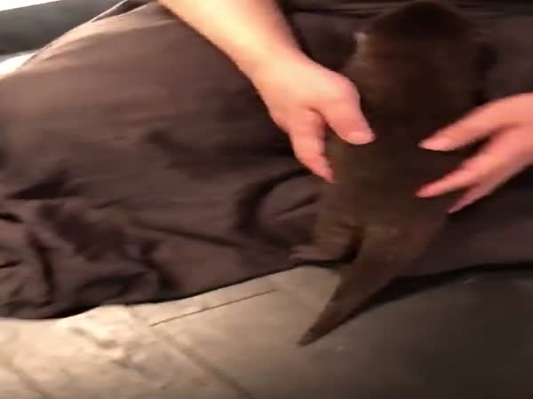 When Your Pet Is Otterly Happy To See You