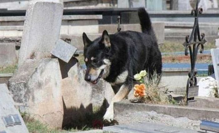 Dog Shows Ultimate Act Of Loyalty (4 pics)