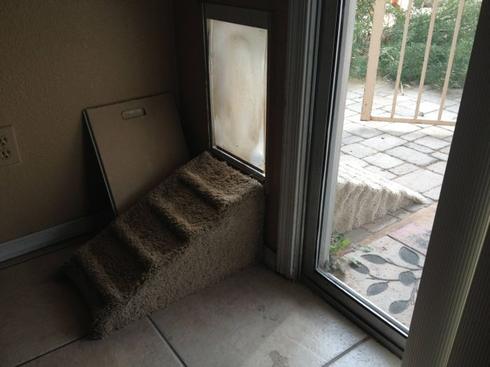 George The Elderly Dachshund Loves Owner's Custom Ramps (4 pics)