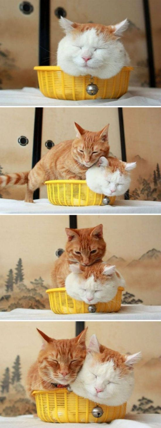 Cats Don't Care, They Sit Where They Want (33 pics)
