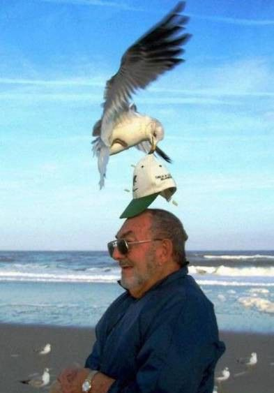 Pics That Were Definitely Taken At The Right Moment (40 pics)