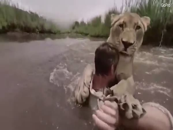 'Lion Whisperer' Catches And Hugs Lion In South Africa