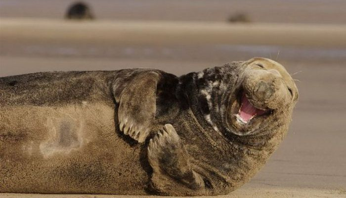 Pics Of Animals Smiling That Will Make You Smile (39 pics)