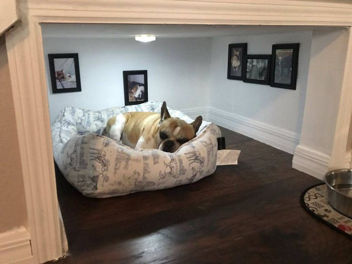 Dog Has A Room That Would Make Humans Jealous (4 pics)