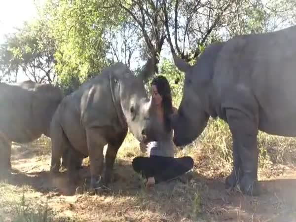 Cute Baby Rhinos Get Snuggled