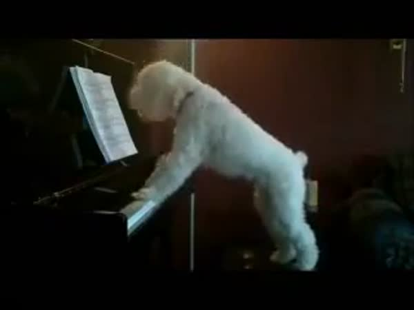 A New Beethoven In The Making