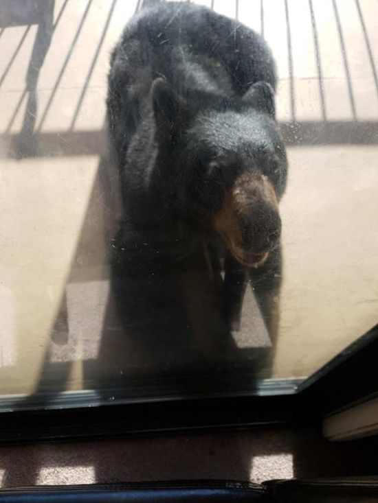 Bear Gets Punched In The Nose In British Columbia (3 pics)