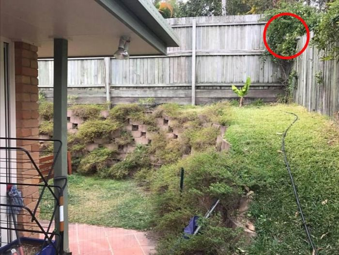 There's A Giant Snake Hiding In This Picture (3 pics)