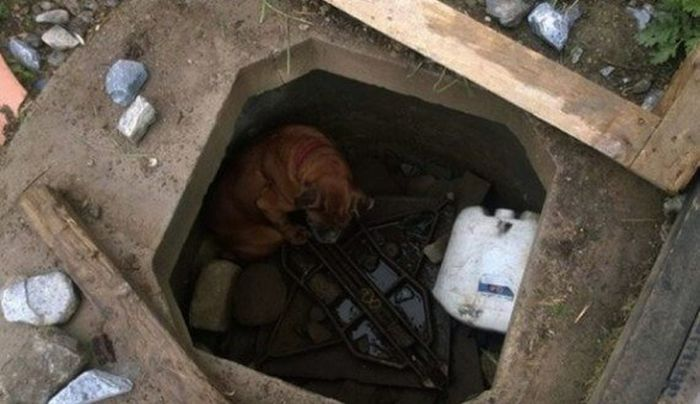 Little Girl Rescues Dog From An Unexpected Location (7 pics)