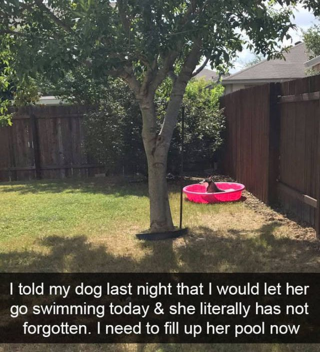 Snapchat Was Definitely Created For Dogs (35 pics)