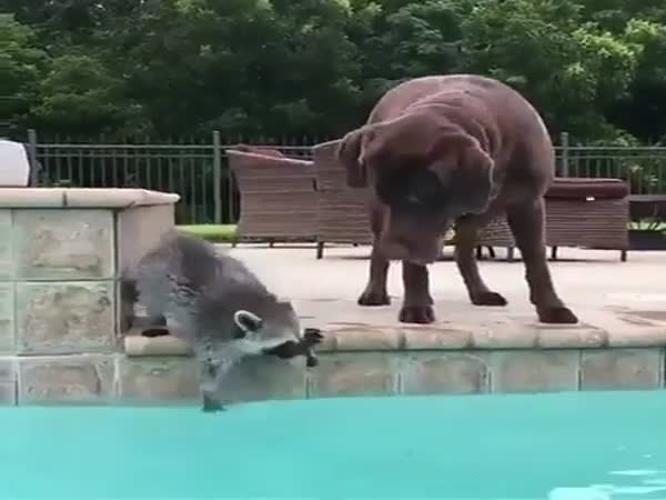 Animals Enjoying All The Summer Fun In The Pool