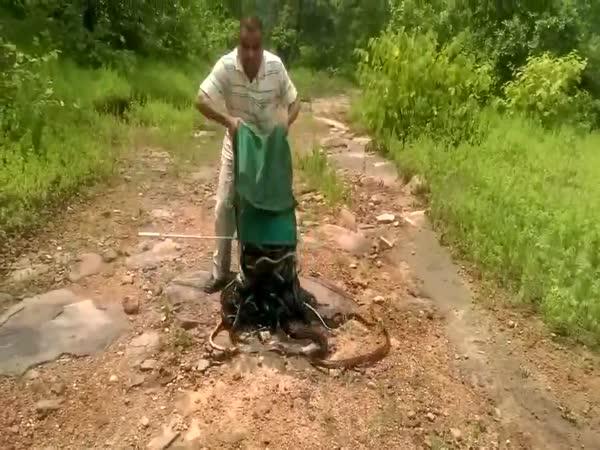 Snake Hunter Releasing Snakes