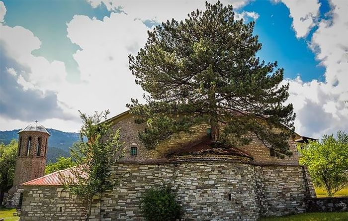 Church In Greece Has A 100 Year Old Tree On The Roof (5 pics)