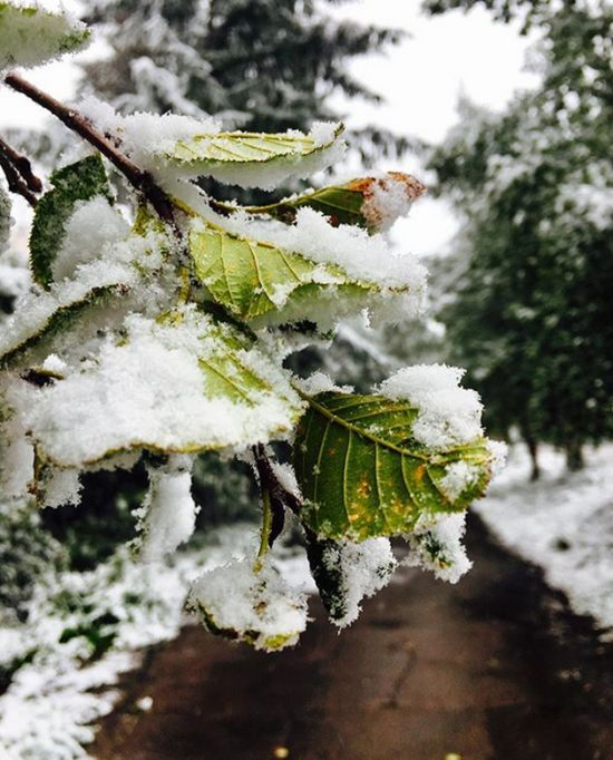 Photos Of August Snowfall In Yakutia (16 pics)