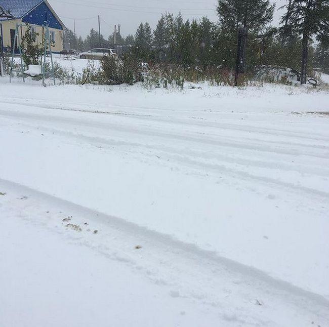 Photos Of August Snowfall In Yakutia (16 pics)