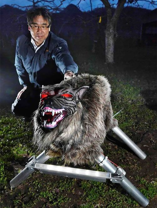 Wolf Robot Protects Farmer's Crops (4 pics + video)