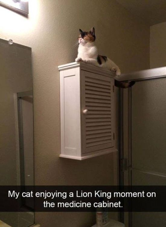 Snapchat Photos That Prove Cats Are Hilarious (29 pics)