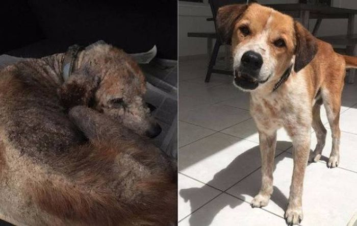 Animals Before And After The Adoption (32 pics)