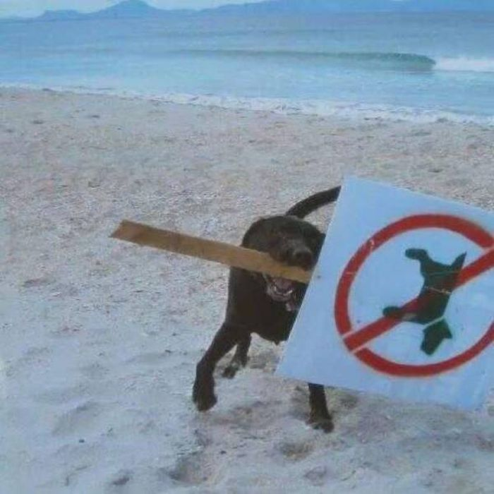 Animals Don't Care About The Rules As Well (45 pics)