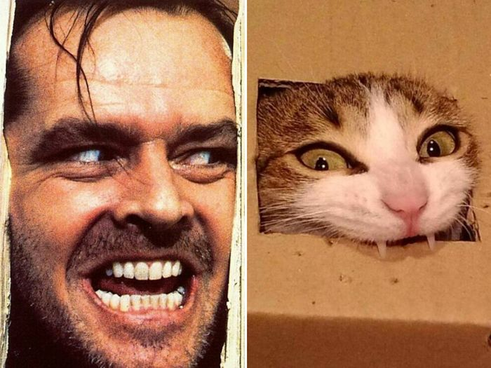 Cats That Look Like Celebrities 18 Pics-7099