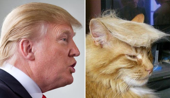 Cats That Look Like Celebrities (18 pics)