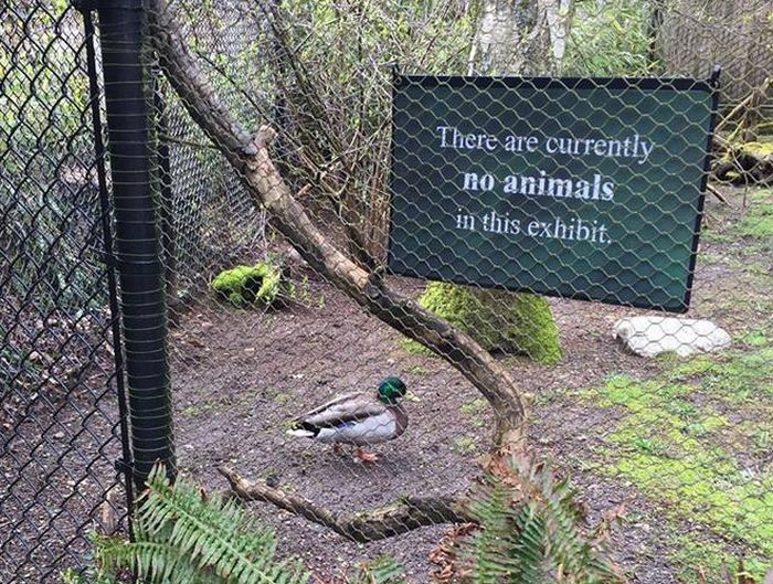 I Do What I Want. Animal Edition (18 pics)