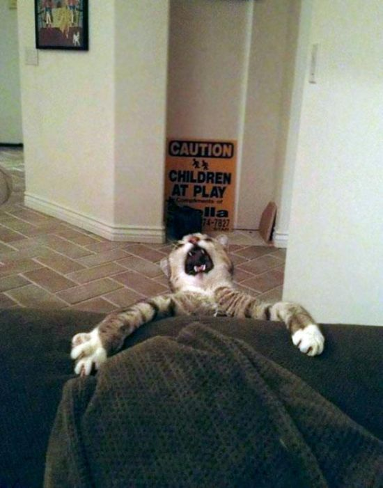Animal Fails (18 pics)