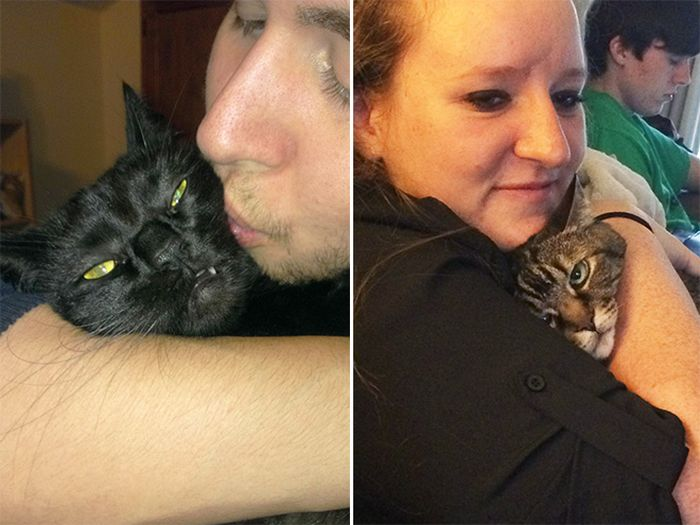 Cats That Didn't Want To Be In Stupid Selfies (18 pics)
