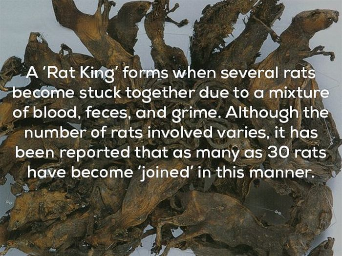 WTF And Scary Facts (21 pics)
