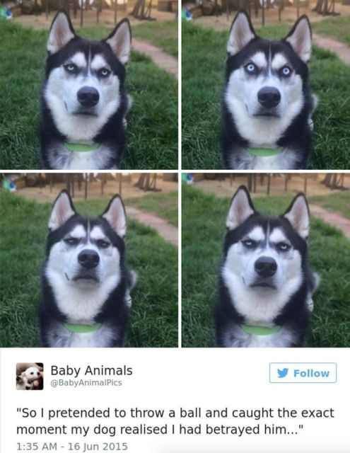Dog Owners Share Laugh-Out-Loud Snaps Of Their Pets (13 pics)