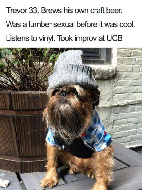 Dogs With Bios Is Just A Perfect Combination (40 pics)