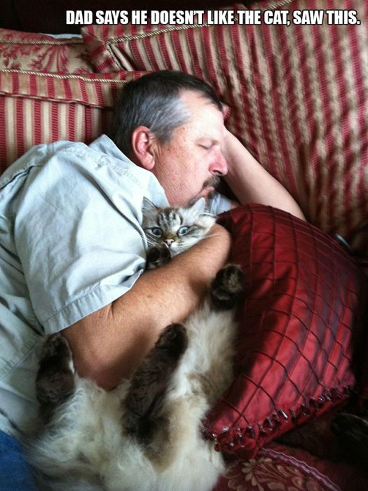 People Who Said They Didn't Want The Damn Cats (12 pics)