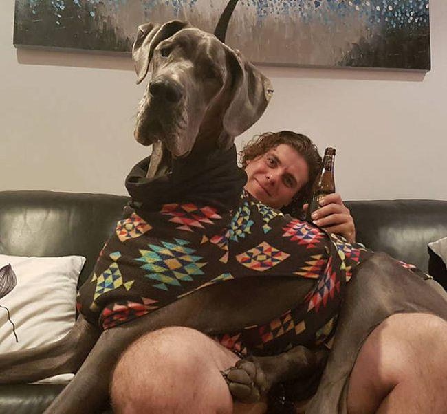 Not An Ordinary Lap Dog (46 pics)