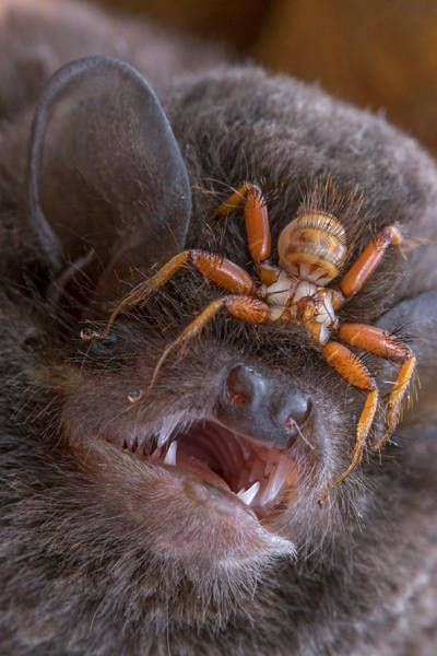 Nature Has A Lot Of Horrifying Stuff To Offer Us (31 pics)