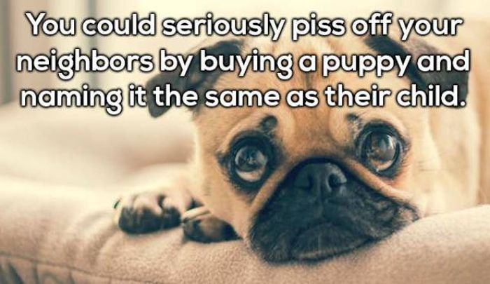 Things You Are Not Going To Argue With (20 pics)