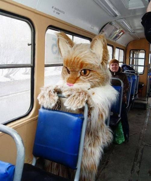 Funny Photos From Russia (39 pics)