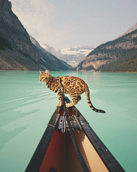 A Cat From Canada That Travels A Lot (36 pics)