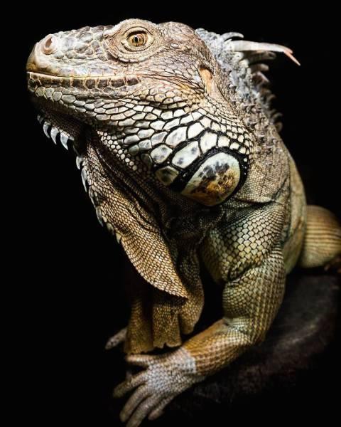 Beautiful Animal Photos By Robert Irwin  (39 pics)