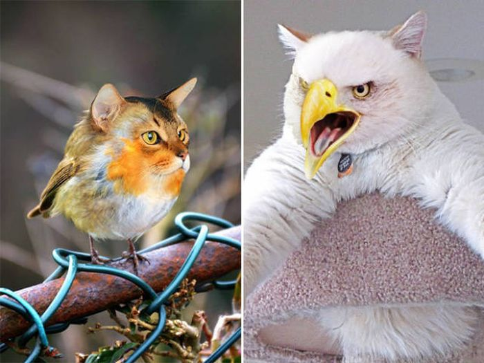 Cats And Birds Are A Perfect Combination (16 pics)